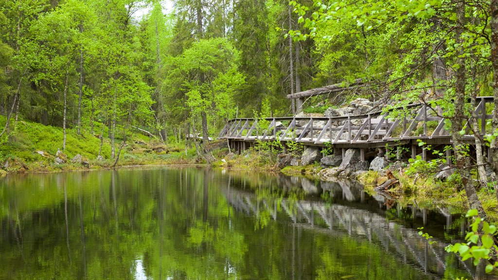 Pyha-Luosto National Park featuring a bridge, forests and a river or creek