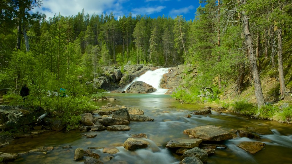 Lemmenjoki National Park showing rapids, forest scenes and a river or creek