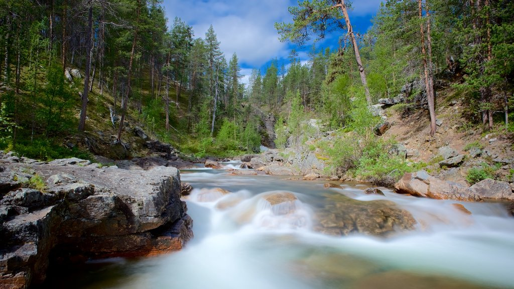 Lemmenjoki National Park which includes tranquil scenes, forest scenes and rapids