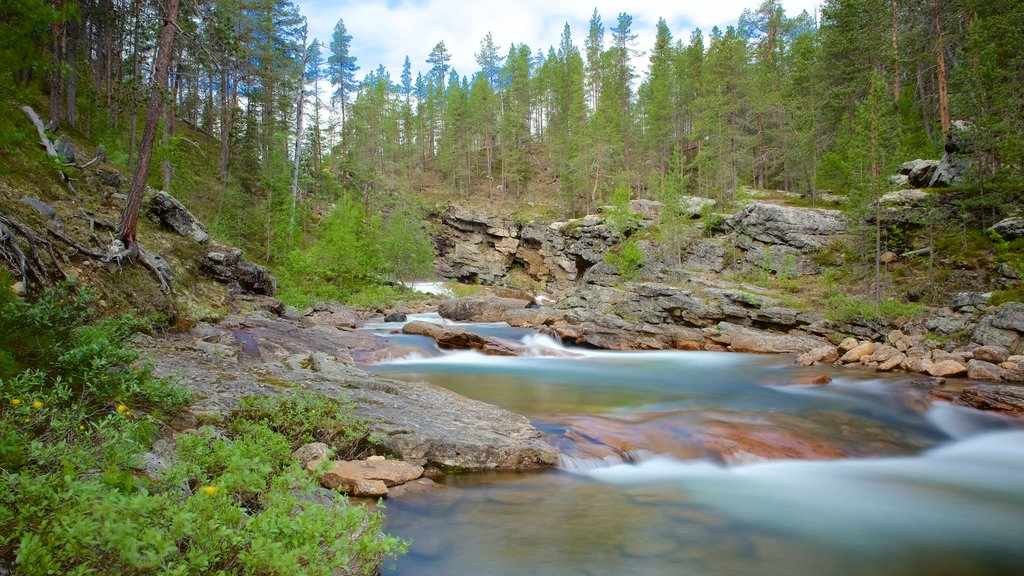 Lemmenjoki National Park showing rapids, tranquil scenes and forests