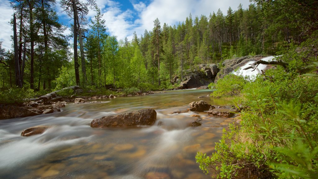 Lemmenjoki National Park showing forests, rapids and tranquil scenes