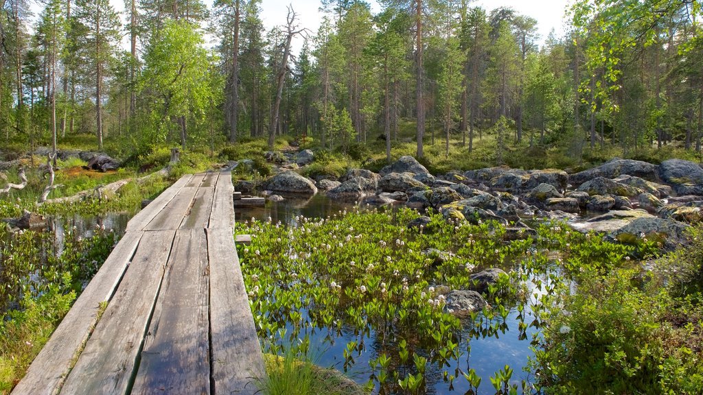Pielpajarvi Wilderness Church which includes a bridge, tranquil scenes and wetlands