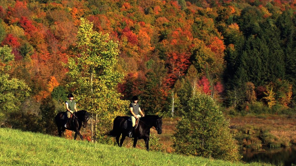 Stowe featuring farmland, fall colors and horseriding