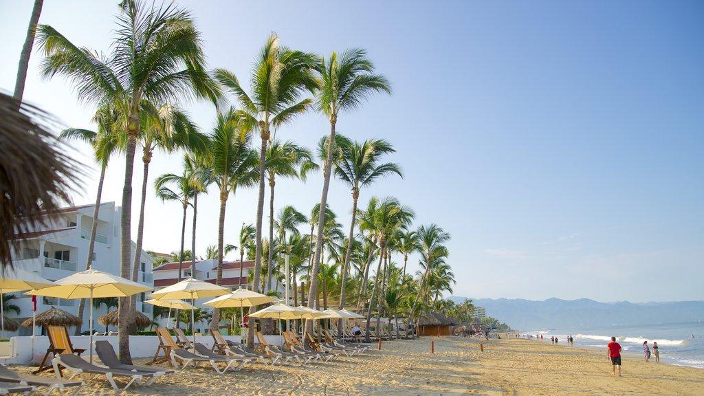 Nuevo Vallarta Beach showing a sandy beach, tropical scenes and a luxury hotel or resort