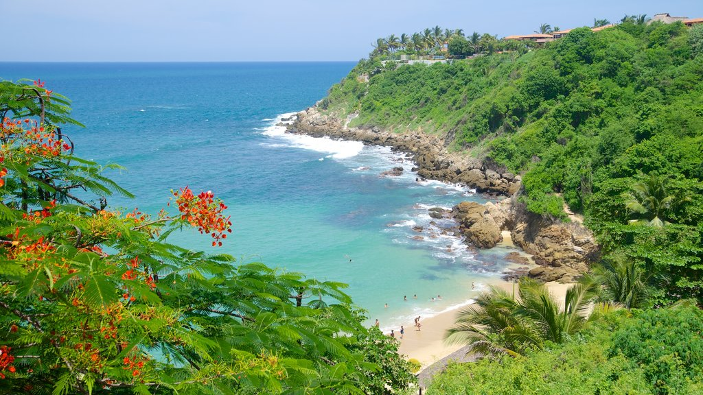 Carrizalillo Beach showing tropical scenes, a sandy beach and rocky coastline