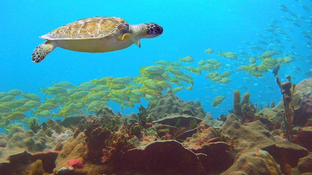Granada que incluye vida marina y arrecifes coloridos