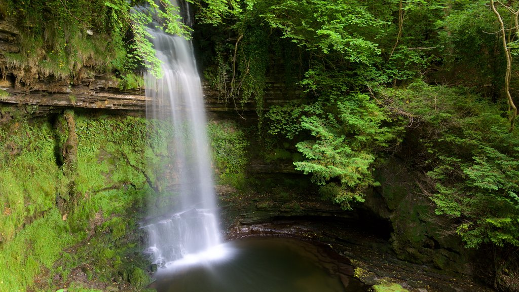 Glencar Waterfall showing forests, a waterfall and a lake or waterhole