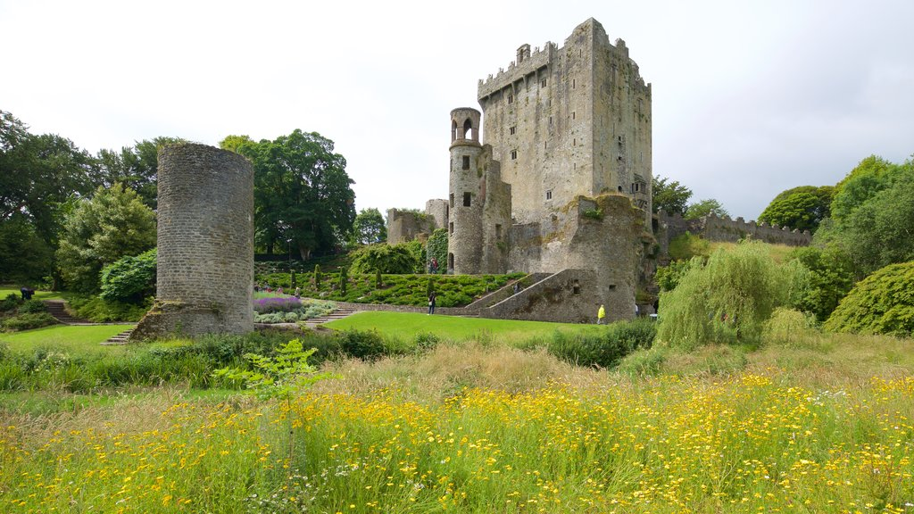 Blarney Castle which includes chateau or palace, wildflowers and heritage architecture