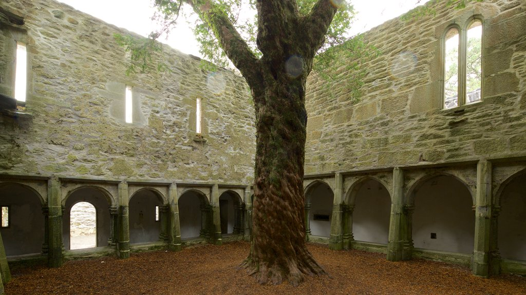 Muckross Abbey featuring chateau or palace, heritage elements and heritage architecture
