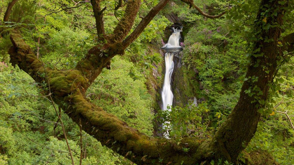 Devil\'s Bridge mostrando escenas forestales, escenas tranquilas y una catarata