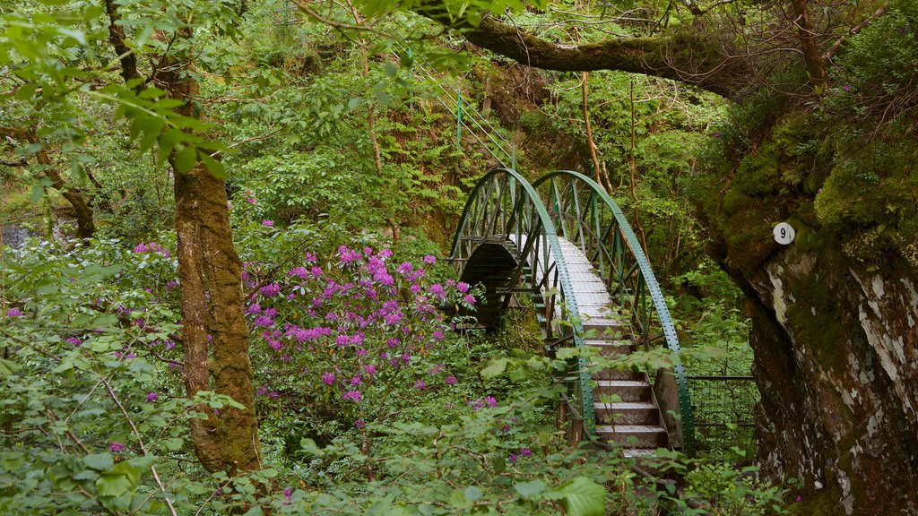 Devil\'s Bridge showing landscape views, forests and wildflowers