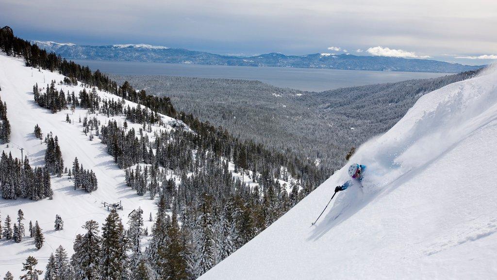 Alpine Meadows Webcam Showing Current Snow Conditions
