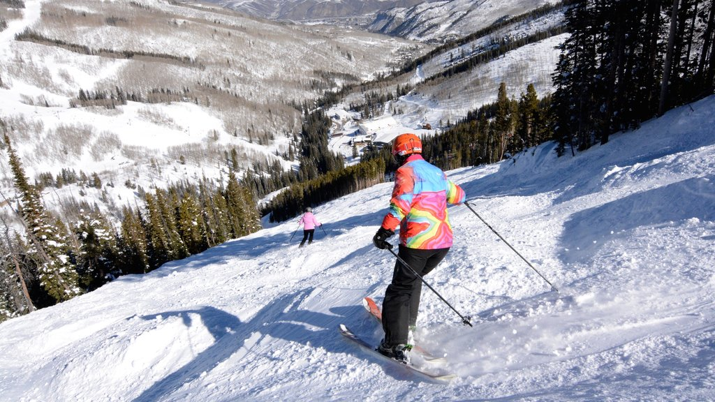 Beaver Creek Ski Area showing forest scenes, snow and snow skiing