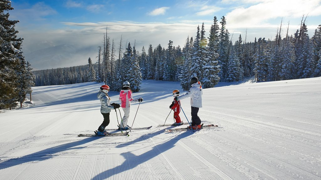 Beaver Creek Ski Area which includes snow, forest scenes and snow skiing