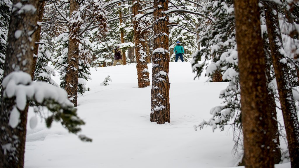 Keystone Ski Resort showing forest scenes, tranquil scenes and snow