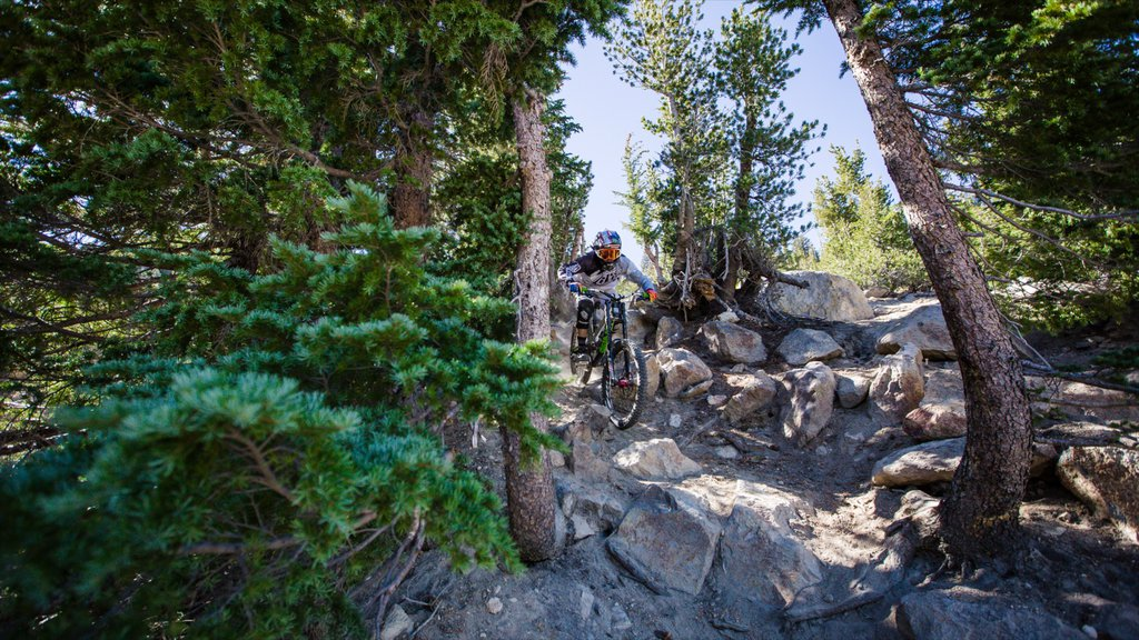Mammoth Mountain Ski Resort featuring tranquil scenes and mountain biking as well as an individual male