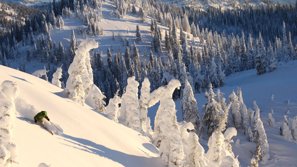 Whitefish Mountain Ski Resort featuring forest scenes and snow
