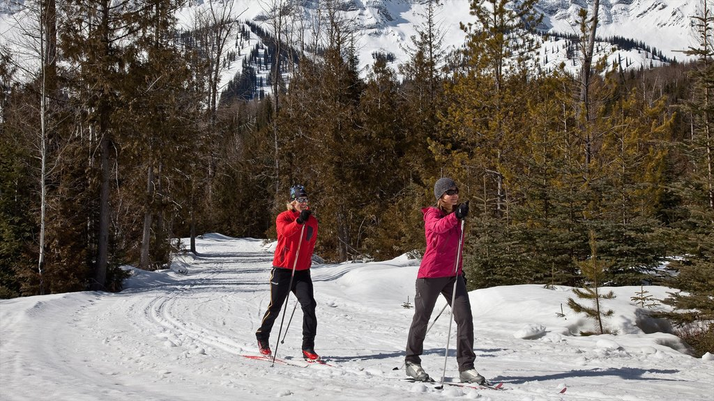 Fernie Alpine Resort which includes forests, cross country skiing and snow