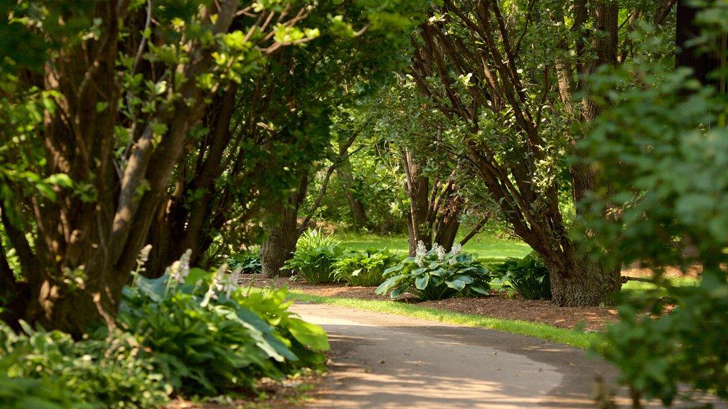 Brampton featuring a park