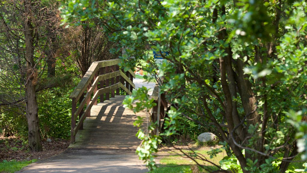 Brampton showing a bridge and a garden