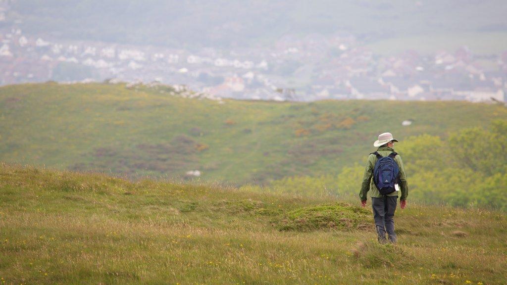 Great Orme que incluye tierras de cultivo y senderismo o caminata y también un hombre