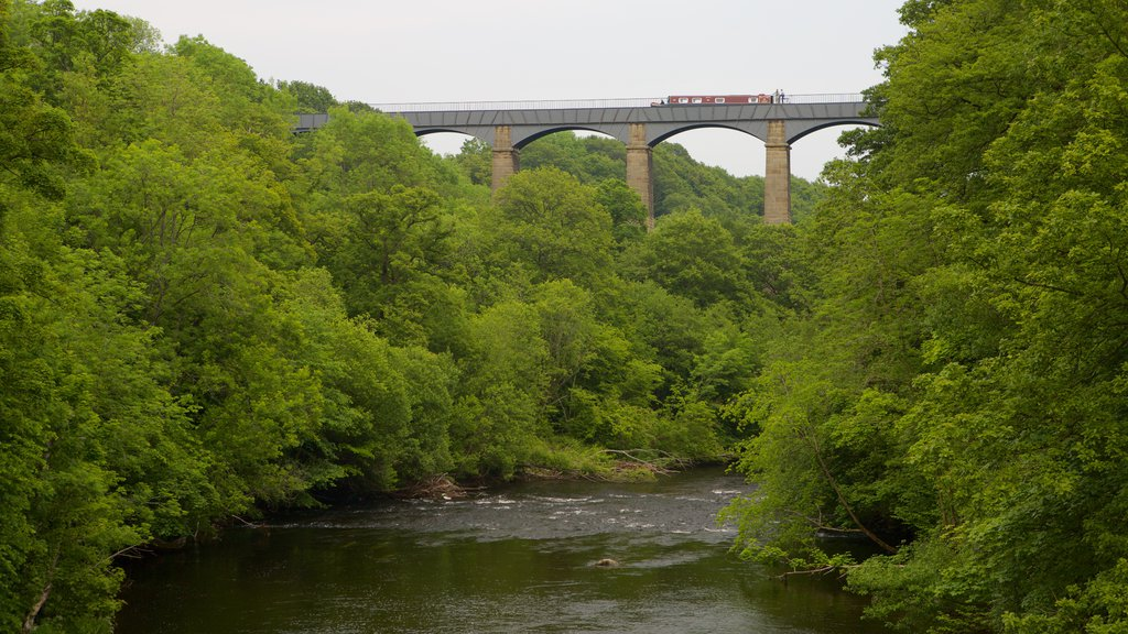 Pontcysyllte Aquaduct showing a river or creek, forests and a bridge