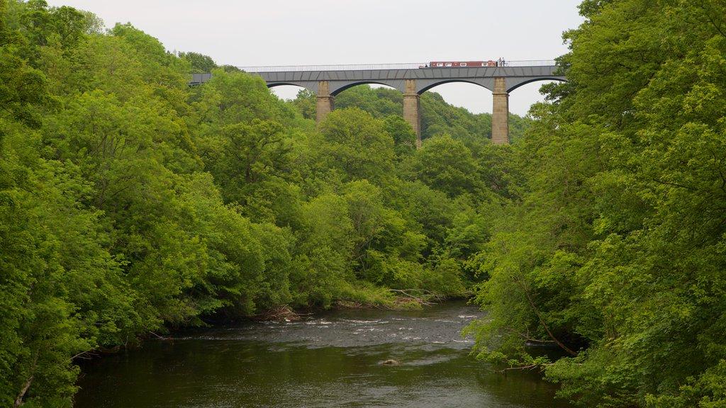 Acueducto de Pontcysyllte mostrando un puente, escenas forestales y un río o arroyo