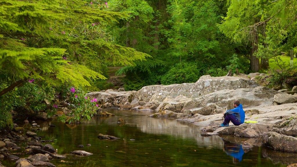 Betws-Y-Coed mostrando escenas forestales y un río o arroyo