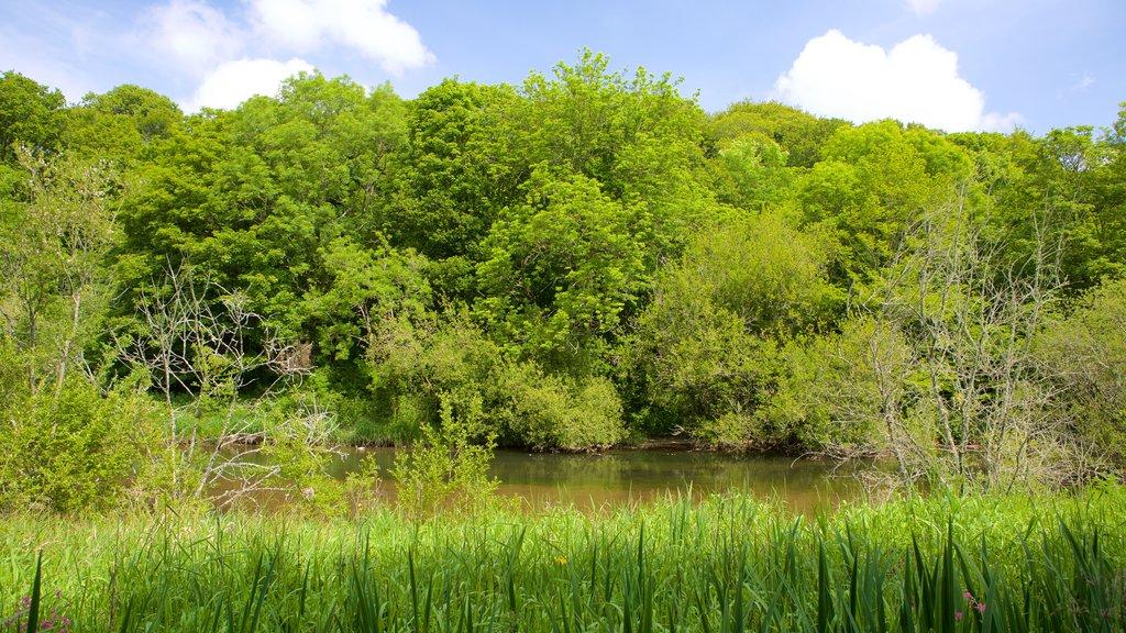 Llangefni mostrando bosques y un río o arroyo