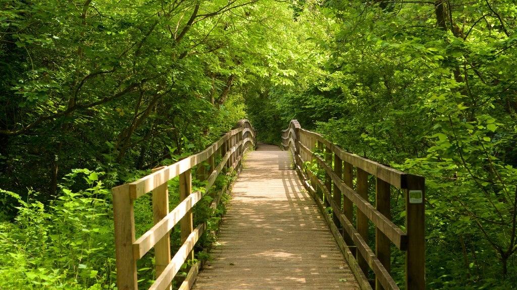 Llangefni ofreciendo escenas forestales y un puente