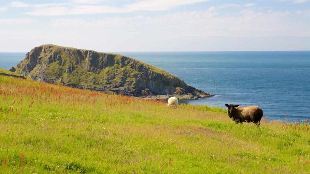 Pembrokeshire Coast National Park showing general coastal views, farmland and land animals
