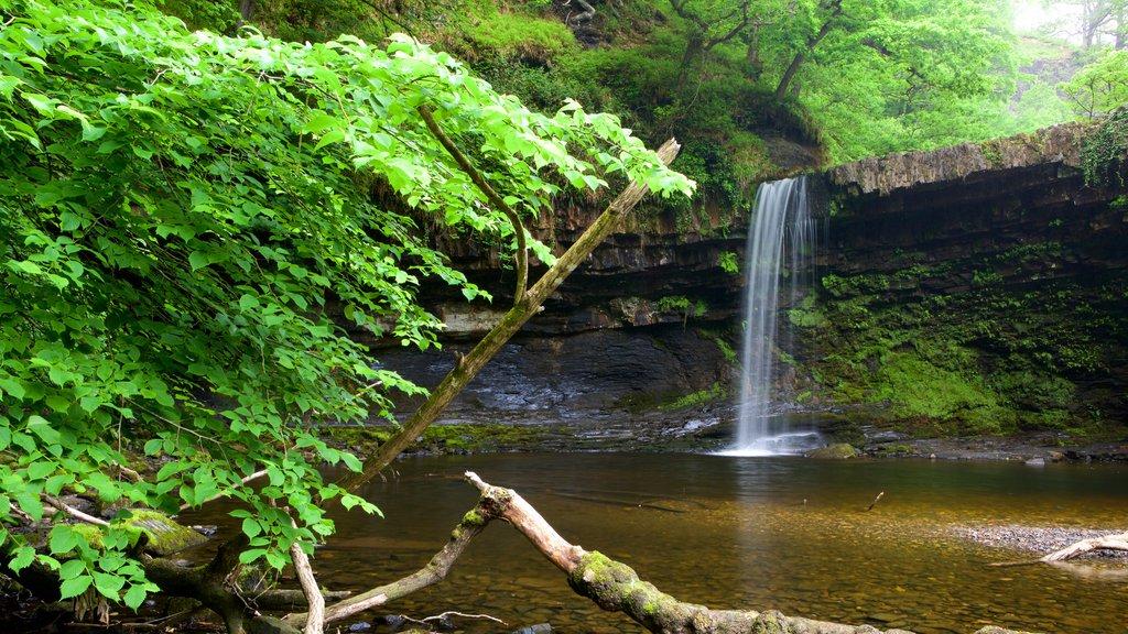 Parque Nacional Brecon Beacons que incluye un lago o abrevadero, selva y una cascada