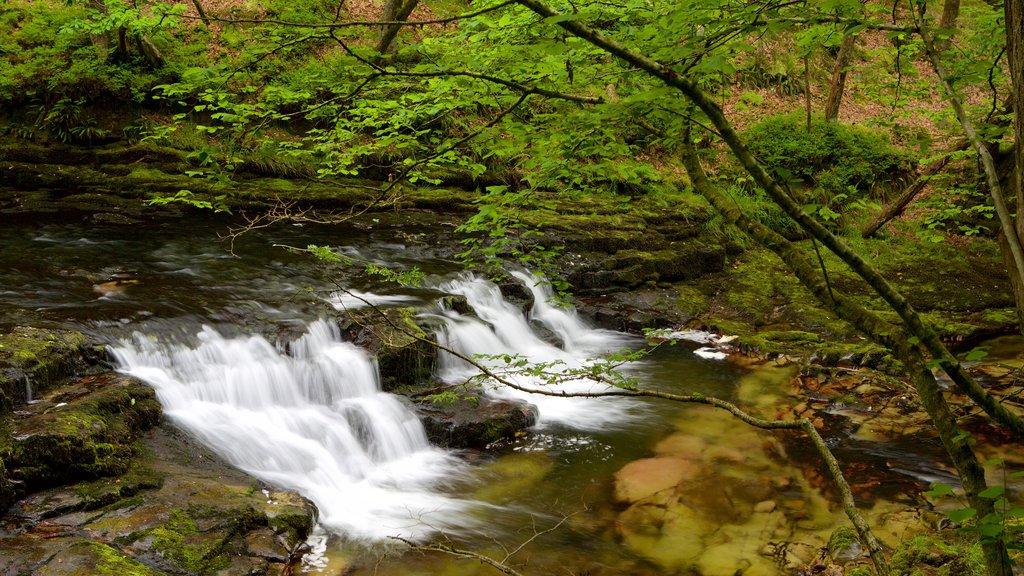 Parque Nacional Brecon Beacons mostrando un río o arroyo, una catarata y selva