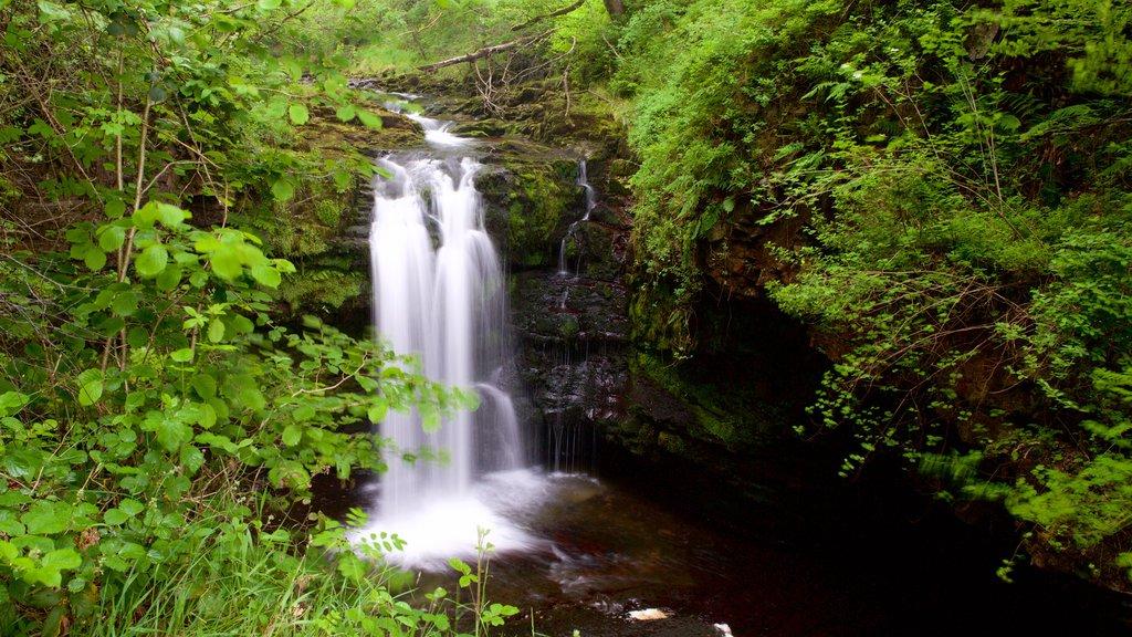 Parque Nacional Brecon Beacons mostrando selva y una catarata
