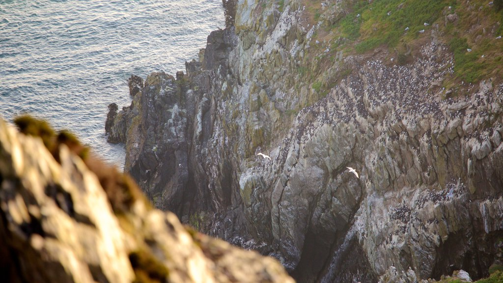 South Stack Lighthouse which includes general coastal views and rocky coastline