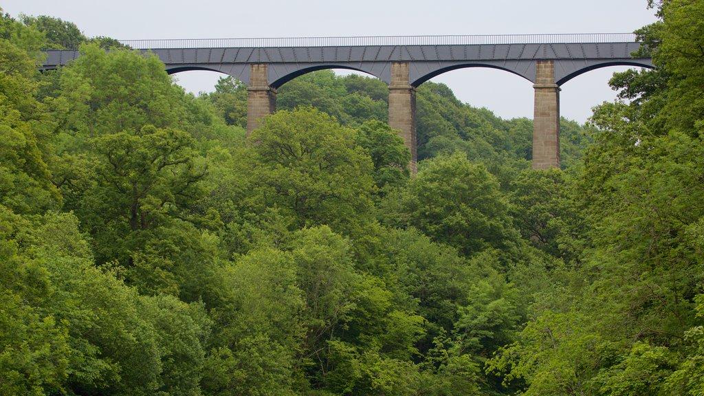 Pontcysyllte Aquaduct showing forests and a bridge
