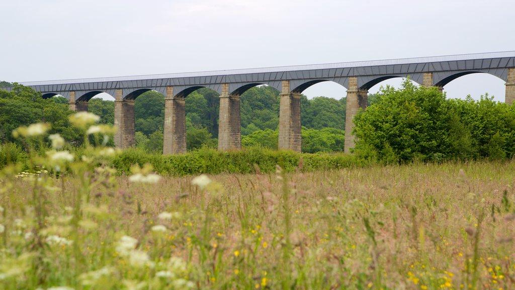 Pontcysyllte Aquaduct featuring farmland and a bridge