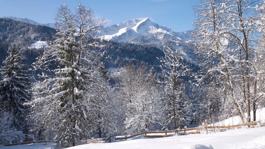 Garmisch-Partenkirchen Ski Resort which includes snow and forest scenes