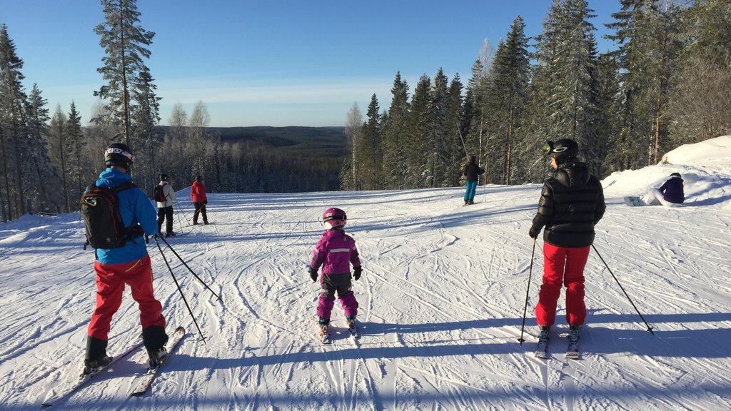 Estación de esquí Kungsberget ofreciendo nieve, escenas forestales y esquiar en la nieve