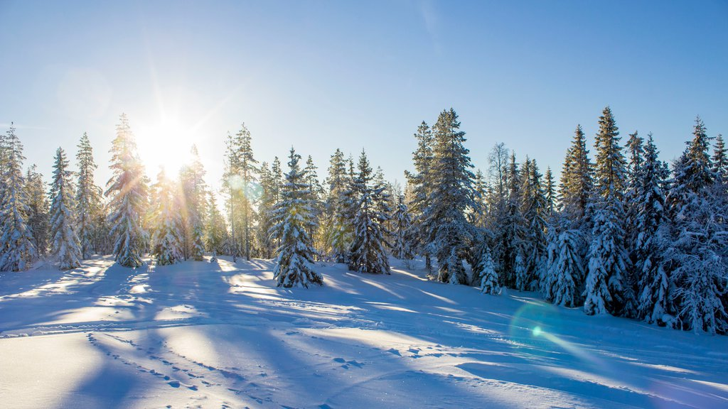 Branas Ski Resort featuring snow and forests