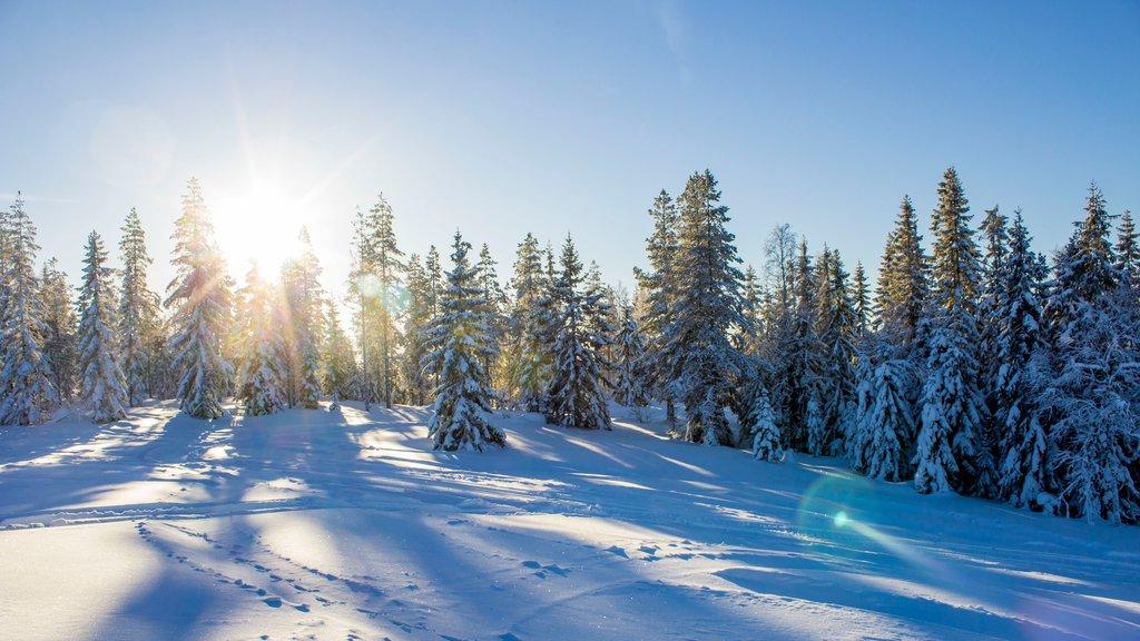 Branas Ski Resort , Syssleback, Suecia que incluye bosques y nieve