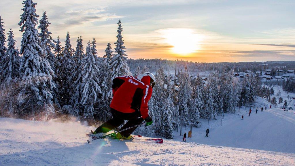 Branas Ski Resort , Syssleback, Suecia ofreciendo escenas forestales, esquiar en la nieve y nieve