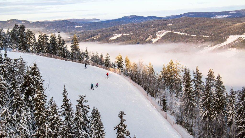 Branas Ski Resort , Syssleback, Suecia ofreciendo neblina o niebla, bosques y nieve