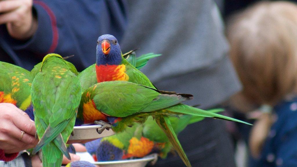 Currumbin Wildlife Sanctuary featuring zoo animals and bird life
