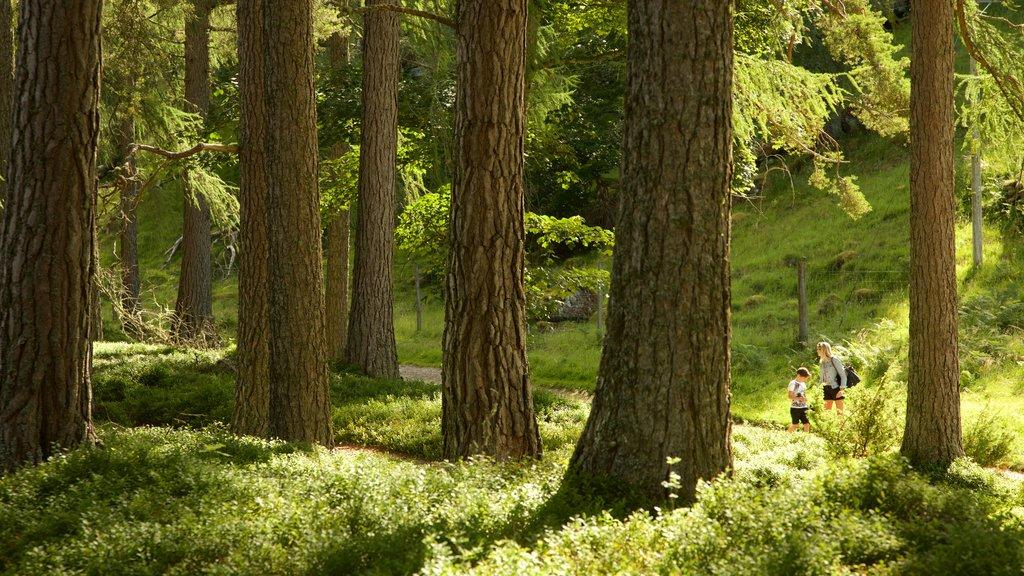Loch an Eilein which includes forests