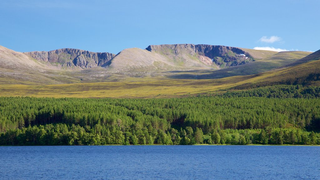 Loch Morlich showing forest scenes, mountains and a river or creek
