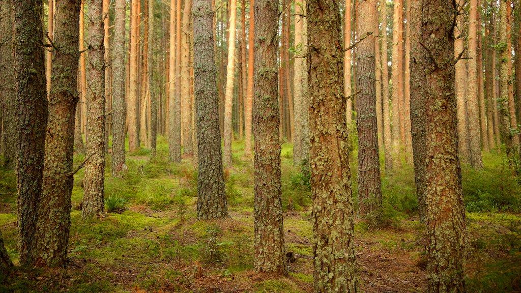 Loch Morlich which includes forests