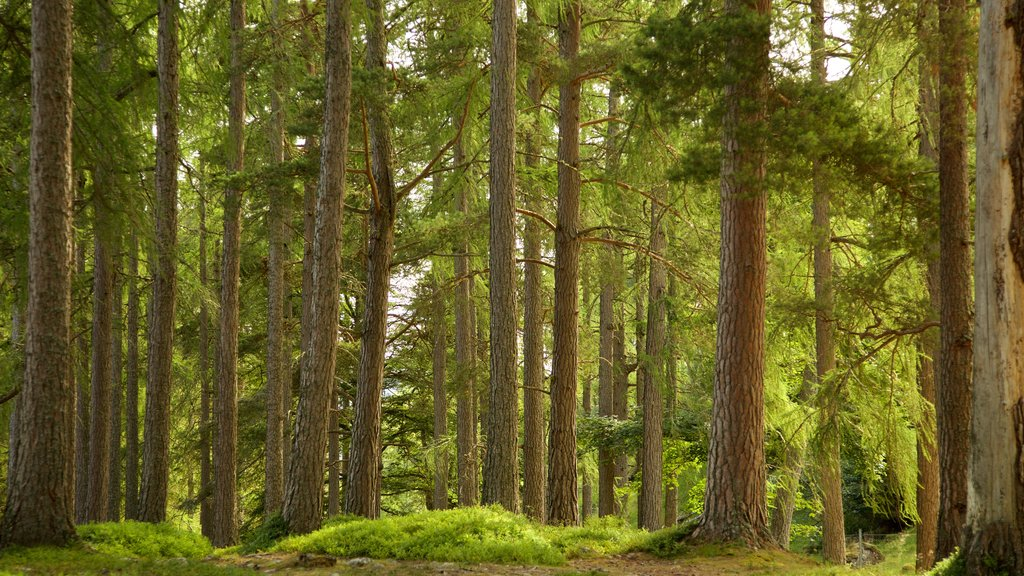 Loch an Eilein featuring forest scenes