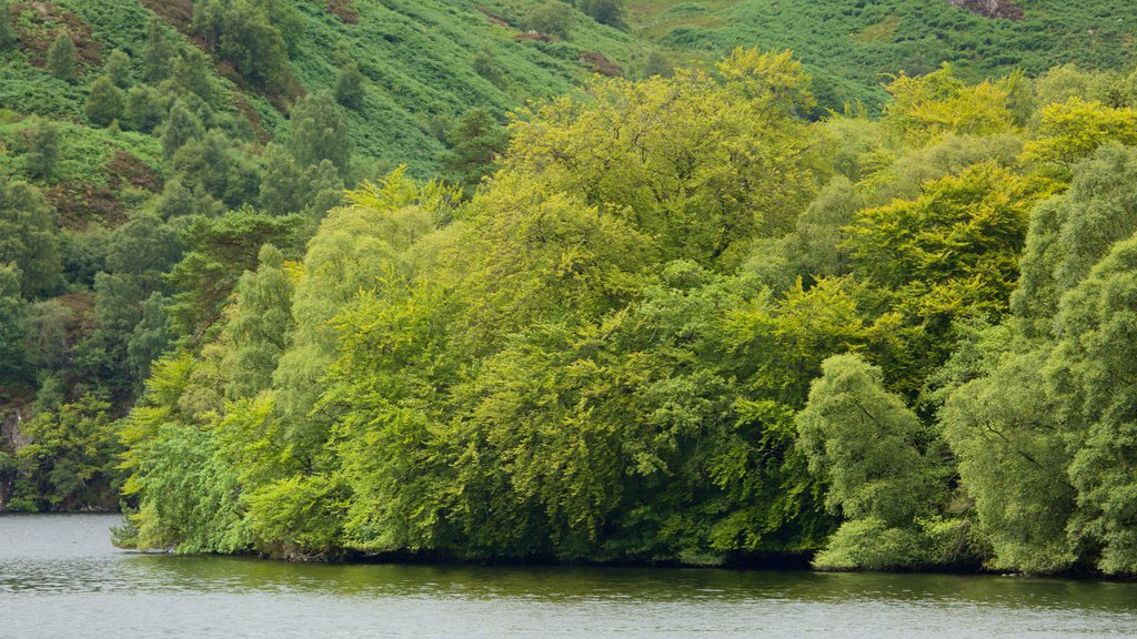 Loch Katrine which includes a lake or waterhole and forest scenes
