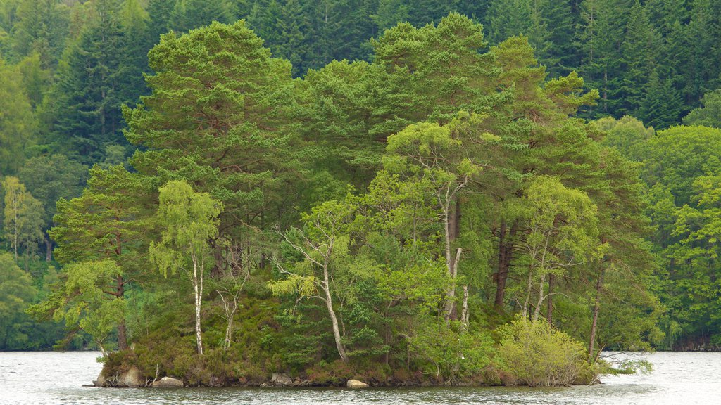 Loch Katrine showing forest scenes, a lake or waterhole and island images